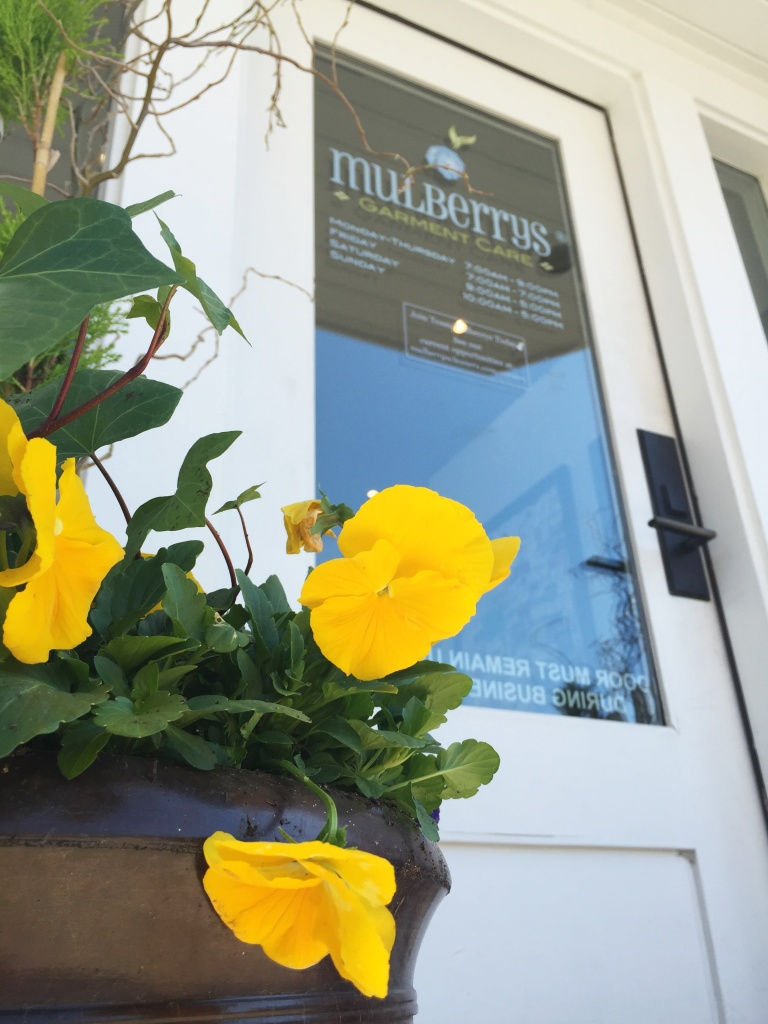 Pansies in front of Mulberrys for Earth Day 2016