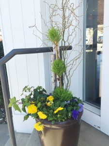 New spring planters at Mulberrys for Earth Day 2016