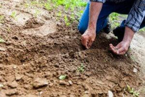 Let mud dry before treating mud stains.
