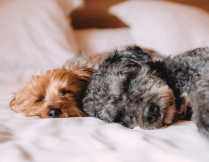 Animal hair can linger in your bedding and linens.